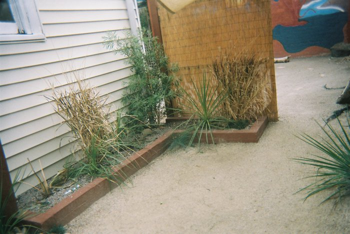 withering plants in courtyard