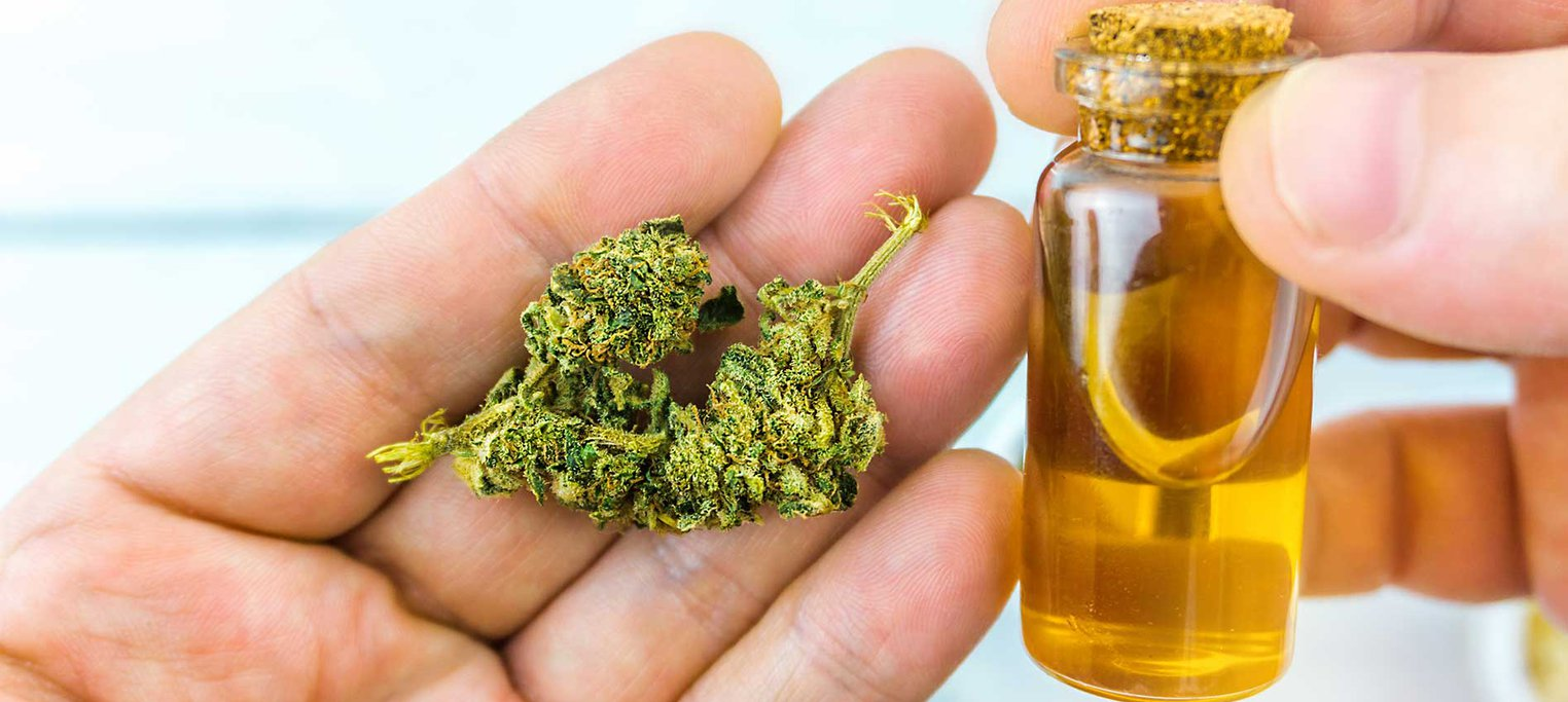 Hands holding cannabis bud and oil